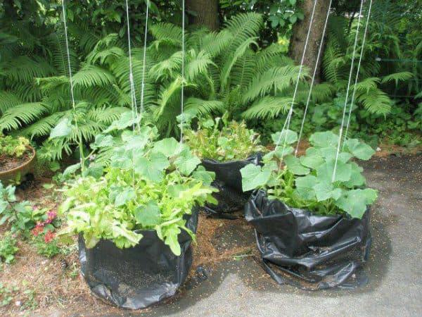 огурцы в мешках пошаговое описание выращивания как посадить
