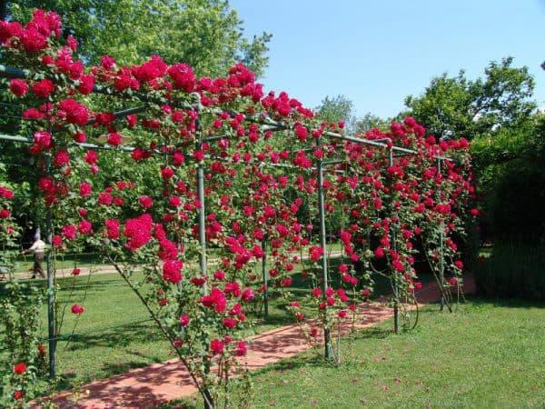 Декоративные опорные конструкции для высокорослых роз
