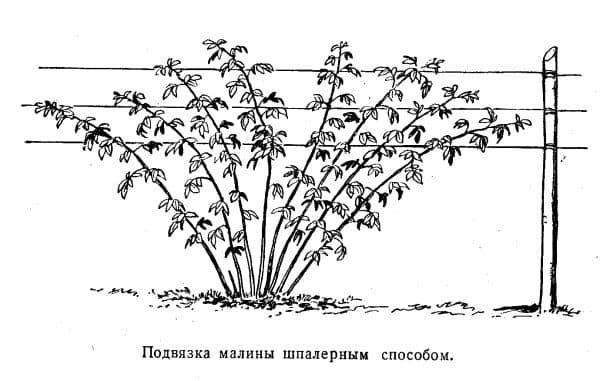 shpalernaya podvyazka